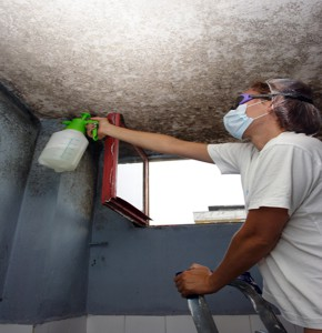 House mold cleaner